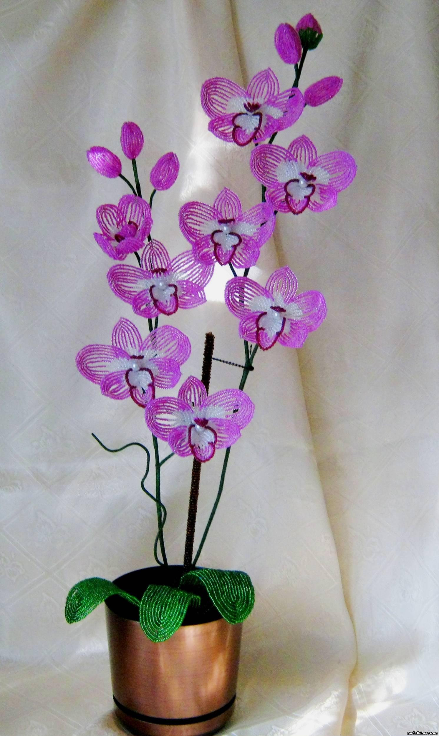 """Орхидея """" Очарование """" ."""