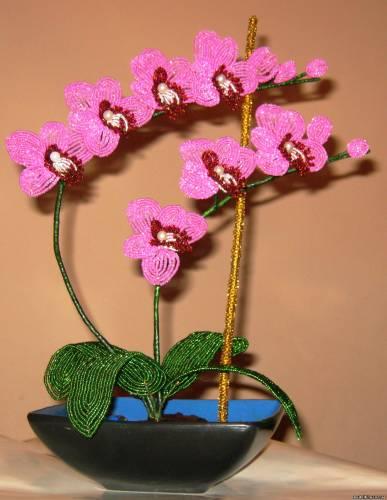 Топиарий из орхидей 86